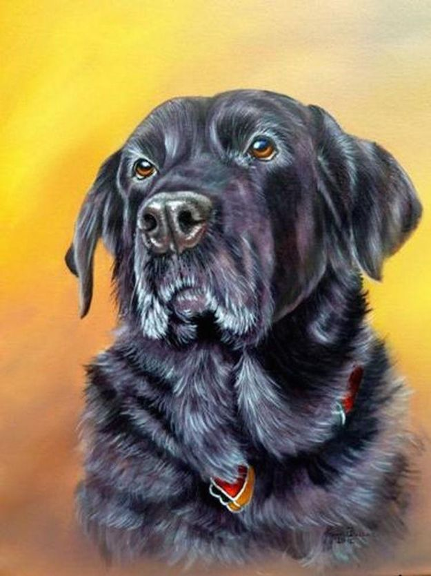 Acrylic Painting Tutorials and Techniques - How To Paint A Dog In Acrylics - DIY Acrylic Painting Ideas on Canvas - Make Flowers, Ocean, Sky, Abstract People, Landscapes, Buildings, Animals, Portraits, Sunset With Acrylics - Step by Step Art Lessons for Beginners - Easy Video Tutorials and How To for Acrylic Paintings #art #painting