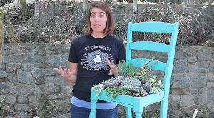 How To Plant Your Succulents In A Chair
