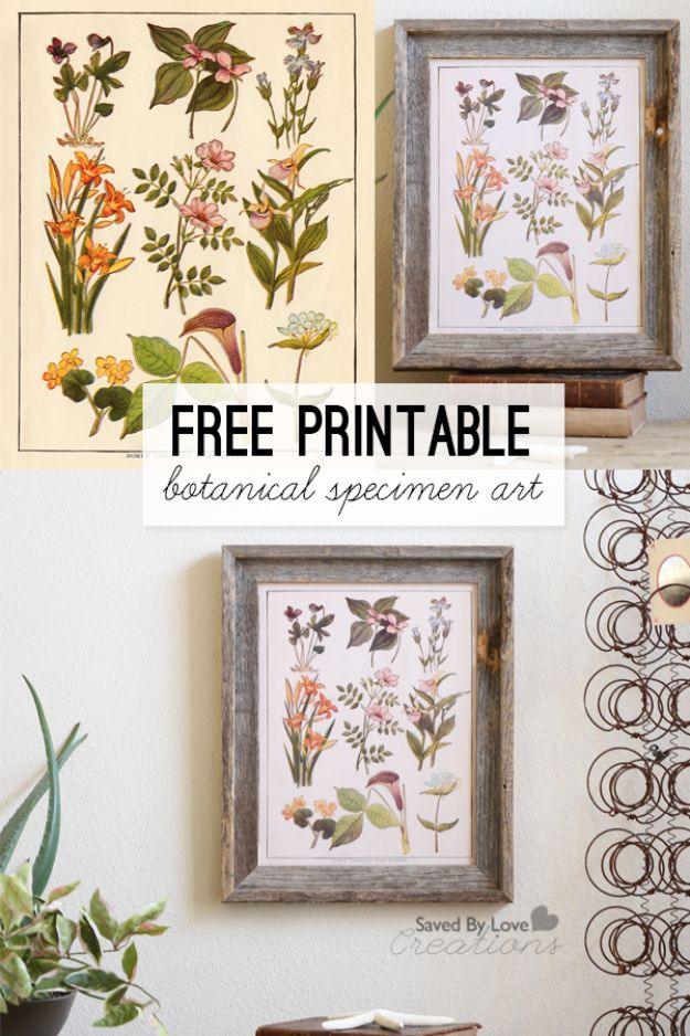 Free Printables For Your Walls - Botanical Specimen Art Free Printable - Easy Canvas Ideas With Free Downloadable Artwork and Quote Sayings - Best Free Prints for Wall Art and Picture to Print for Home and Bedroom Decor - Signs for the Home, Organization, Office - Quotes for Bedroom and Kitchens, Vintage Bathroom Pictures - Downloadable Printable for Kids - DIY and Crafts by DIY JOY #wallart #freeprintables #diyideas #diyart #walldecor #diyhomedecor #freeprintables