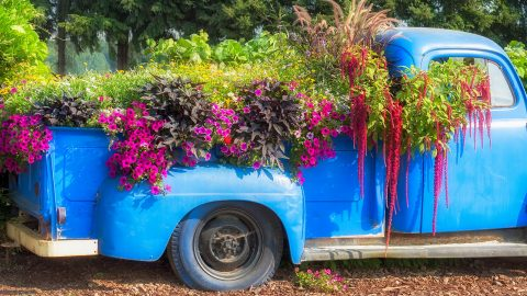 If Your Yard Doesn't Have One of These 45 Pickup Truck Planter Ideas Yet, You're Not Doing Things Right | DIY Joy Projects and Crafts Ideas