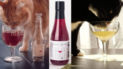 Why Drink Alone When The Cat Can Drink, Too? | DIY Joy Projects and Crafts Ideas