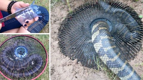 This DIY Trap Rids Your Yard Of Even The Biggest Snakes | DIY Joy Projects and Crafts Ideas