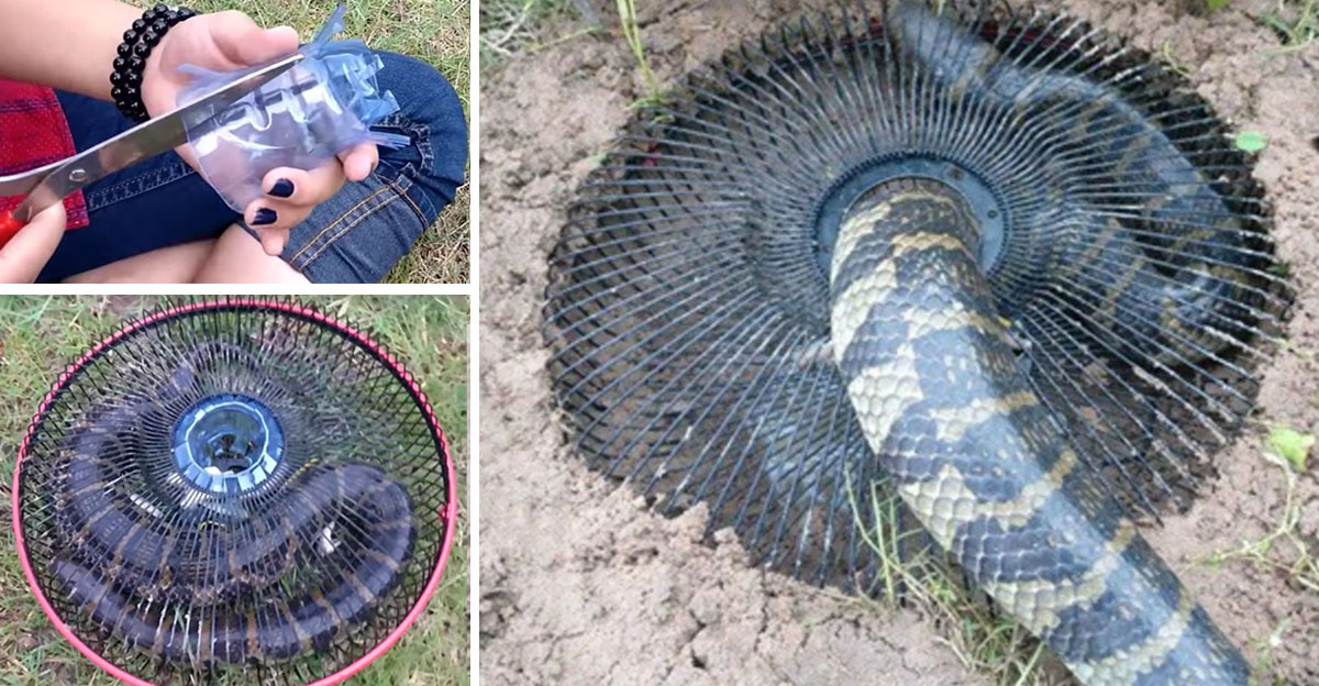 This DIY Trap Can Help Rid Snakes From Yards