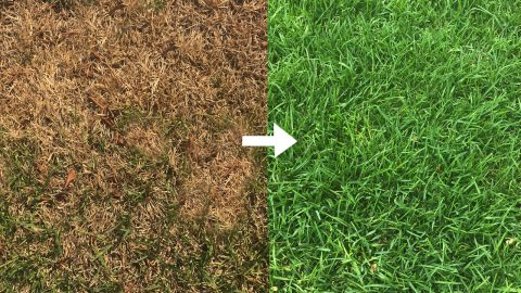What To Do (And What Not To Do) To Help Your Grass Survive The Summer Heat | DIY Joy Projects and Crafts Ideas