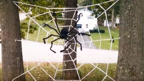 DIY Giant Spider Web With Saran Wrap | DIY Joy Projects and Crafts Ideas