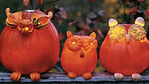 DIY Halloween: How to Make Pumpkin Owls | DIY Joy Projects and Crafts Ideas