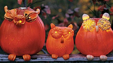 DIY Halloween: How to Make Pumpkin Owls | DIY Joy Projects and Crafts Ideas