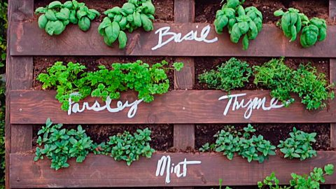 DIY Upcycled Pallet Herb Garden | DIY Joy Projects and Crafts Ideas