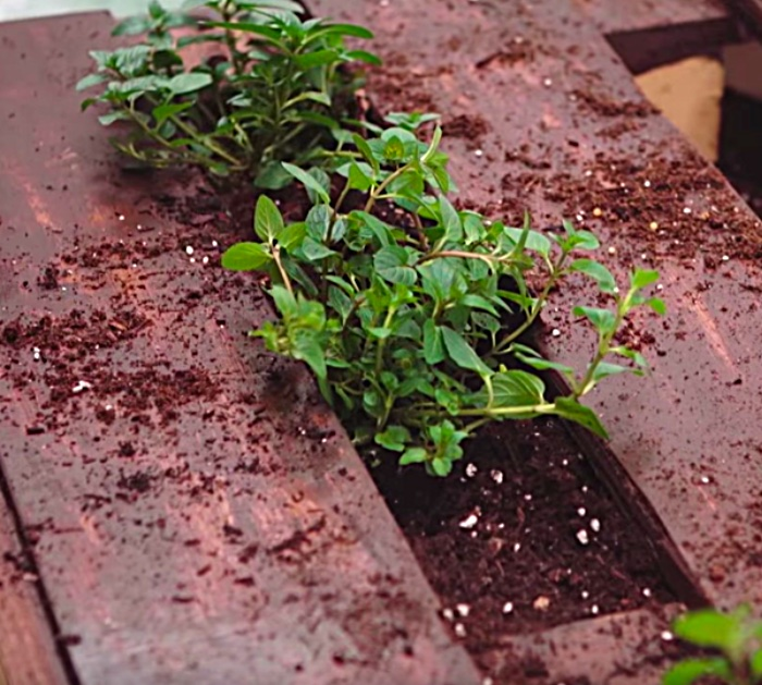 Learn to make a really cute easy pallet herb garden in a few steps