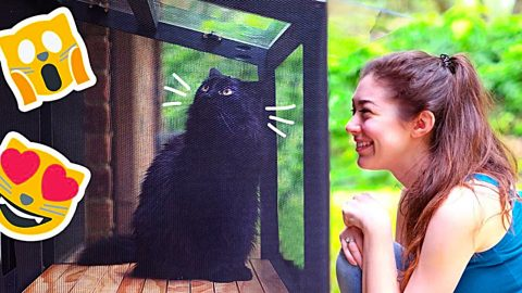 DIY Catio Patio For A Cat   DIY Joy Projects and Crafts Ideas