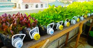 How to Grow Mustard Greens And Other Plants In Recycled Plastic Bottles