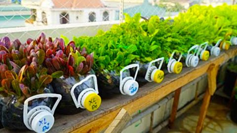 How to Grow Mustard Greens And Other Plants In Recycled Plastic Bottles | DIY Joy Projects and Crafts Ideas