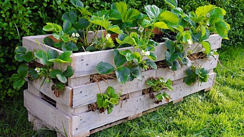 DIY Strawberry Pallet Planter | DIY Joy Projects and Crafts Ideas