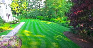 How To Get Rid Of Crabgrass And Clover In The Lawn