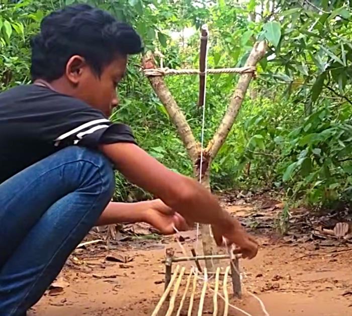 Snare a wild piglet in Viet Nam
