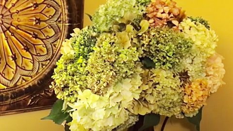 How To Make Coffee Filter Hydrangeas | DIY Joy Projects and Crafts Ideas