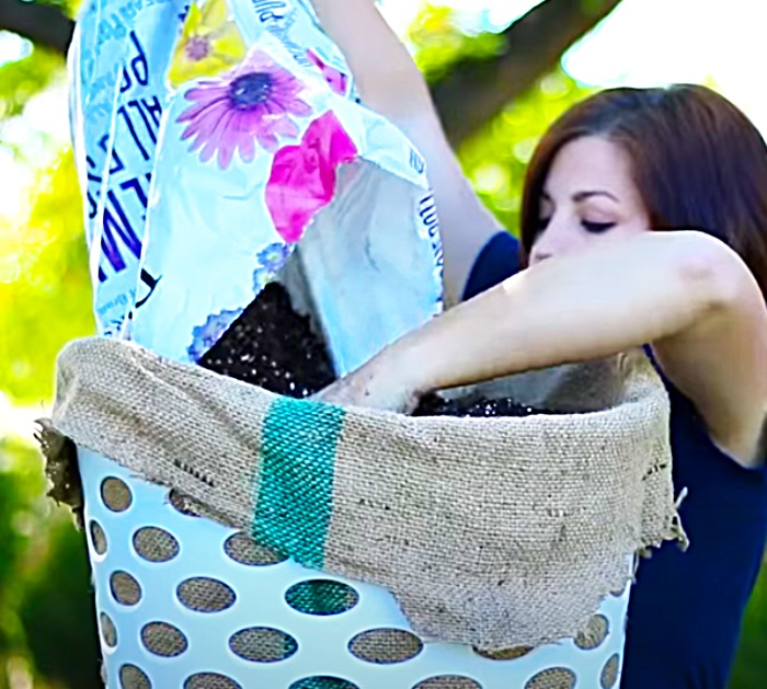Make a planter for strawberries from a laundry basket