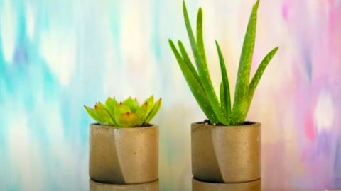 How To Make A Self Watering Concrete Planter | DIY Joy Projects and Crafts Ideas