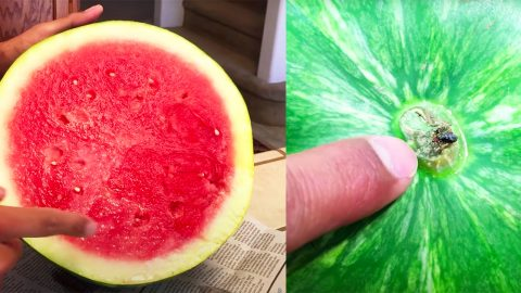 How To Pick A Sweet Watermelon | DIY Joy Projects and Crafts Ideas