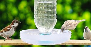 How To Make A Bird Water Feeder From A Water Bottle