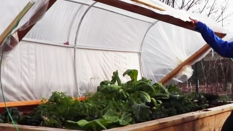 How To Build A Hinged Hoophouse For A Raised Bed   DIY Joy Projects and Crafts Ideas