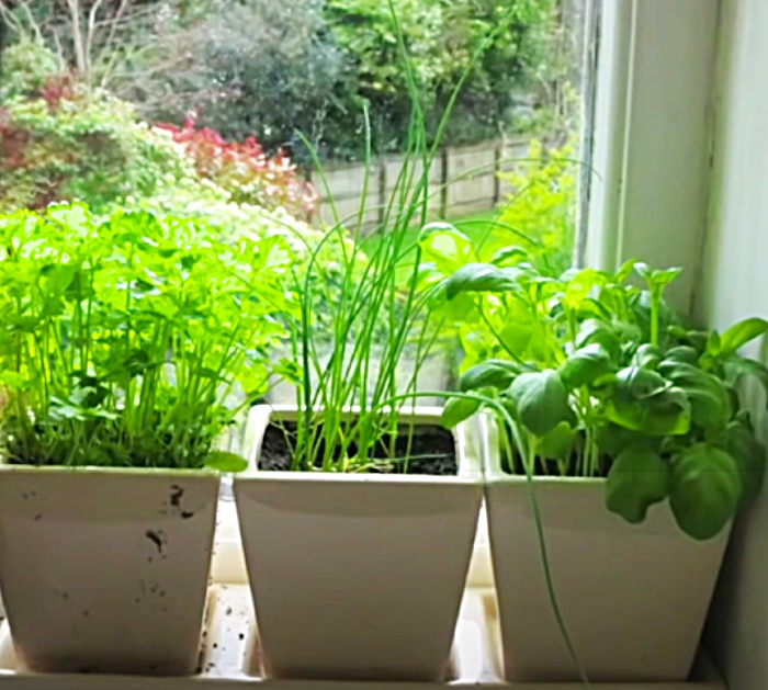 How To Grow Herbs In An Apartment Window Sill