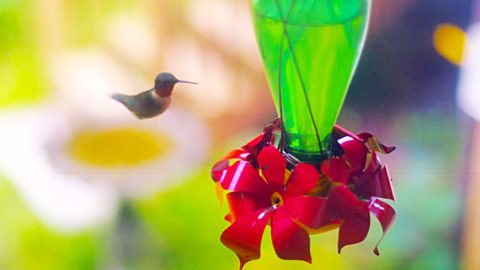 How To Make A Hummingbird Feeder From A Glass Bottle | DIY Joy Projects and Crafts Ideas