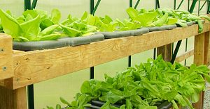 How To Build A Hydroponic Vegetable Garden At Home