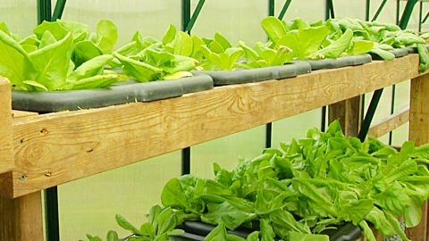 How To Build A Hydroponic Vegetable Garden At Home | DIY Joy Projects and Crafts Ideas