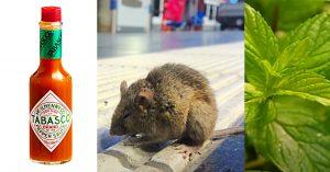 7 Natural Ways To Repel Mice