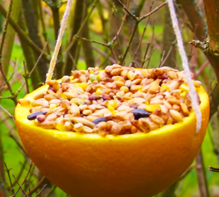 How To Make a Bird Feeder Out Of An Orange Peel