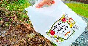 5 Ways To Use Vinegar In The Garden