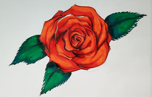 How to Draw A Rose - Easy Drawing Idea for Drawing Roses With Step by Step tutorial and Video