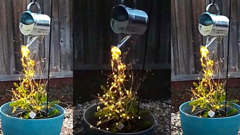 How To Make Watering Can LED Cascading Lights | DIY Joy Projects and Crafts Ideas