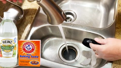How To Clean A Smelly Garbage Disposal   DIY Joy Projects and Crafts Ideas