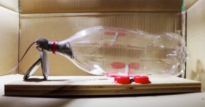 How To Make A Mouse Trap Using A Liter Bottle
