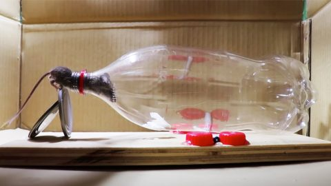 How To Make A Mouse Trap Using A Liter Bottle | DIY Joy Projects and Crafts Ideas