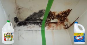 How To Remove And Kill Mold