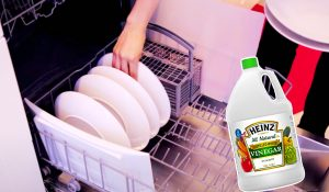 How To Load a Dishwasher So It Holds As Much As Possible