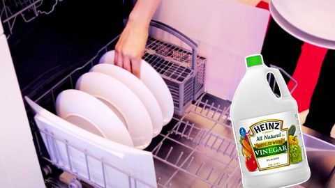 How To Load a Dishwasher So It Holds As Much As Possible | DIY Joy Projects and Crafts Ideas