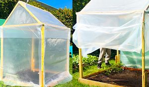 How To Build A Small $20 Greenhouse