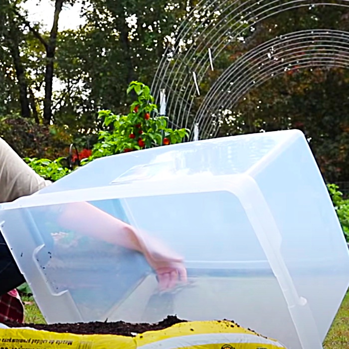 How To Grow Salad Greens All Winter Long - Easy Way To Grow Salad - How To Make A Mini Greenhouse