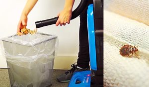 How To Vacuum Bed Bugs Using Pantyhose