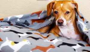 How To Sew A 10-Minute Pet Snuggle Bed