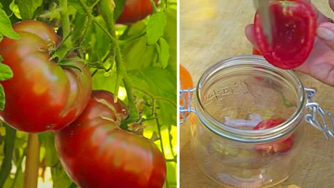 How To Save Seeds At Home | DIY Joy Projects and Crafts Ideas