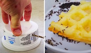 Get Rid Of Ants Fast And Easy