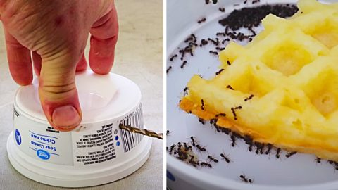 Get Rid Of Ants Fast And Easy | DIY Joy Projects and Crafts Ideas