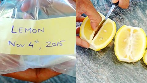 How To Grow A Lemon Tree From Seeds | DIY Joy Projects and Crafts Ideas