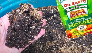 How To Revive Old Potting Soil