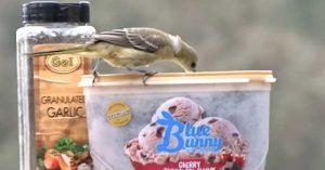 Easy DIY Hummingbird Feeder From Ice Cream Carton